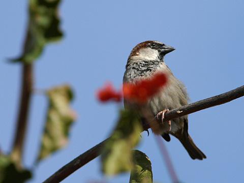 2008-12-15-D3-nikon-300-f4-bird