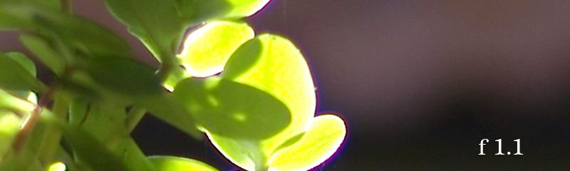 2009-07-02-50mm-NOKTON-fstops-a
